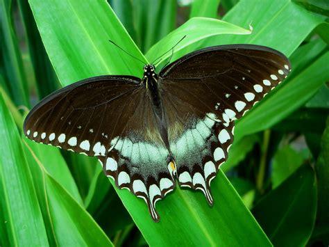 Cool Desktop Wallpaper Of Butterfly Wallpaper Of Sailfish