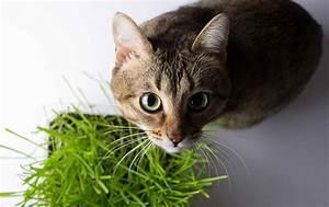 Gemüse Für Katzen : giftige pflanzen f r katzen ~ Watch28wear.com Haus und Dekorationen