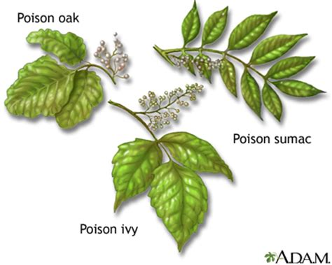 poison plant pictures fossils lessons tes teach