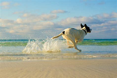 Posso Portare Il In Spiaggia in spiaggia posso portarlo ulisse quality shop