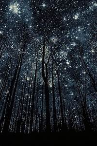 Trees And Stars    The Wonderous Poetry Of Nature At Night