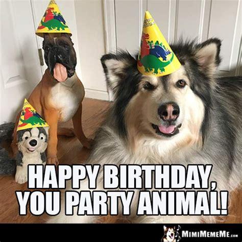 Birthday Party Memes - dog birthday meme happy birthday you party animal funny animal birthday memes pinterest