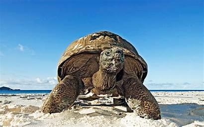 Turtle Wallpapers Tartaruga Backgrounds Tortuga Praia Playa