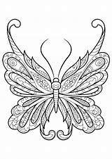 Coloring Butterfly Adults sketch template