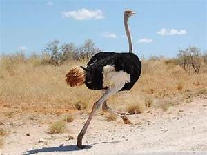 The Jungle Store: Large Leaps For Ostriches