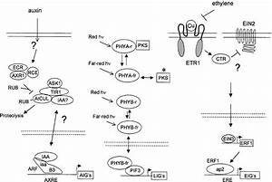 Conservation And Innovation In Plant Signaling Pathways  Cell