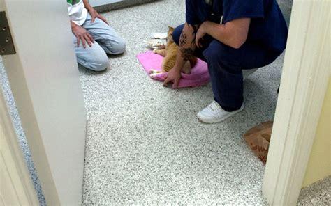 epoxy flooring veterinary top five reasons why epoxy floors are the right choice for veterinary clinics animal