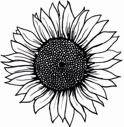 Sunflower Tattoo Simple Layout Tattoos Drawing Flower