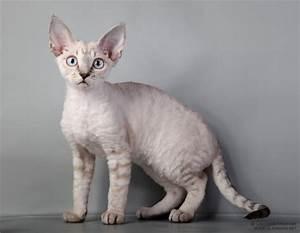 Katzen Fernhalten Von Möbeln : welche katzenrasse f r reine wohnungshaltung katze ~ Michelbontemps.com Haus und Dekorationen