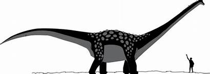 Antarctosaurus Formation Anacleto Fossil Dinosaur Wiki Comparison