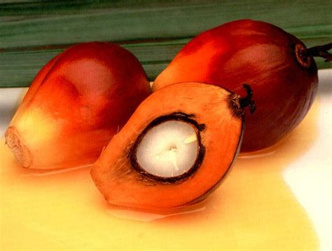sebutir brondolan buah kelapa sawit alwepo