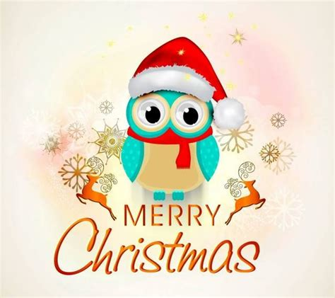 merry christmas owl images merry christmas wallpaper cute owl christmas wallpapers pinterest cute owl wallpapers and