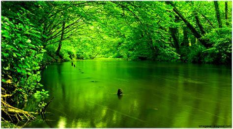 Nature Green Wallpaper  Mega Wallpapers