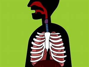 Respiratory System Lesson Plans And Lesson Ideas