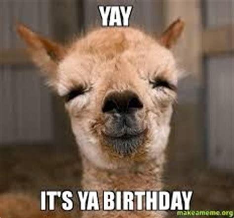 Llama Birthday Meme - birthday funnies birthdays and llamas on pinterest