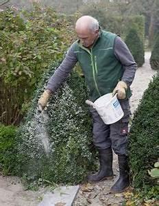 Rasen Voller Moos : buchsbaum probleme ist algenkalk die l sung pflanzen buche baum garten und garten anpflanzen ~ Watch28wear.com Haus und Dekorationen
