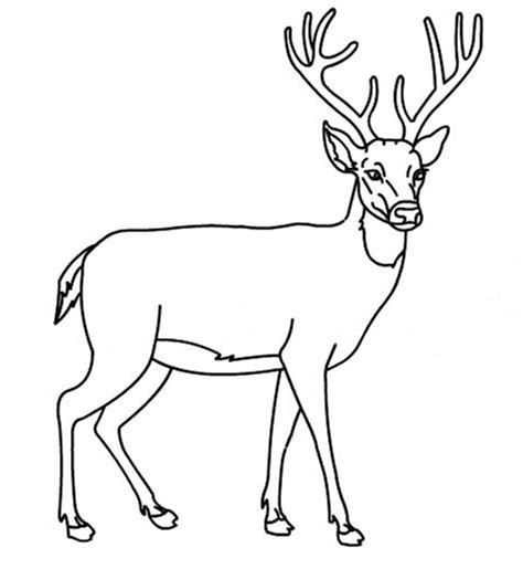 Coloring Deer by White Tailed Deer Coloring Pages B5ceae 22413