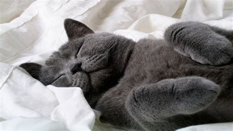 funny cats sleeping funny cute cats compilation