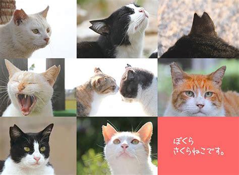 野良猫 耳 カット