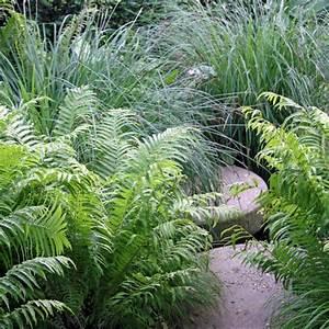 Farn Im Garten : farne pflanzen pflege und tipps mein sch ner garten ~ Orissabook.com Haus und Dekorationen
