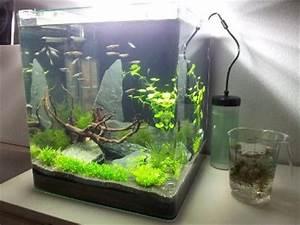 Fische Aquarium Hamburg : dennerle nano cube 60l hamburg 8103547 ~ Lizthompson.info Haus und Dekorationen