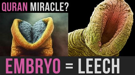 Embryo Leech Amazing Quran Miracle Mindblow Youtube