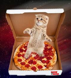 cat pizza kitten surfing on some pizza in rainbow outer space