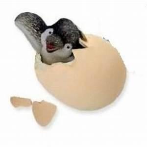 Hatch'ems Penguin Egg - Grand Rabbits Toys in Boulder