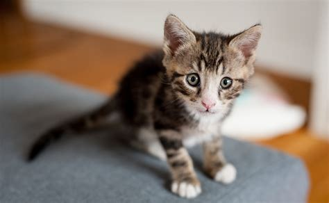 50 Cute Kitten Names For Your Adorable New Fluffball