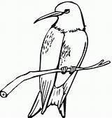 Calliope Template Coloring sketch template