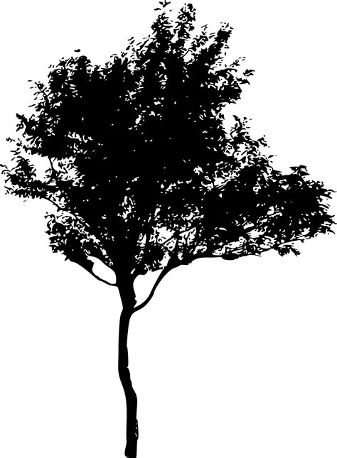 tree branches silhouette png www pixshark com images
