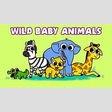 Learn Wild Animals  Baby Animal Names  Newborn Safari Zoo Wildlife Video For Kids Youtube