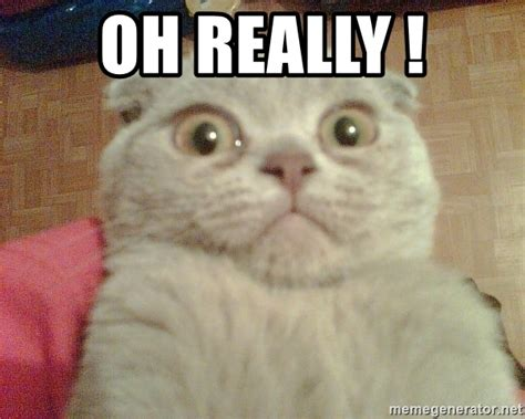 Oh Really Meme - oh really geezus cat meme generator