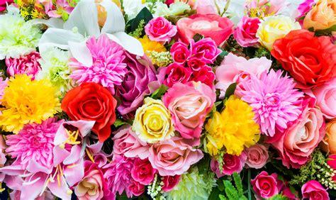 colorful flowers  ultra hd wallpaper hintergrund