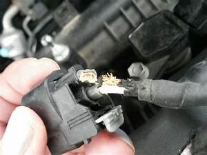 2016 Hyundai Elantra Rodents Chew Soy Based Wire Covering
