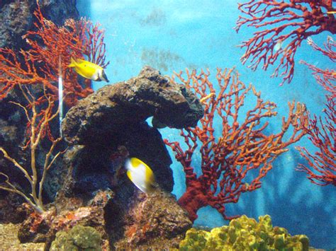 Visit The Rayong Aquarium For A Glimpse Into Thailands