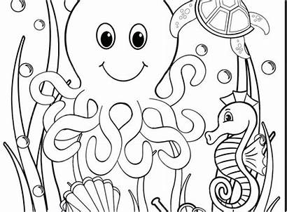 Coloring Pages Underwater Ocean Animals Sheets Sheet