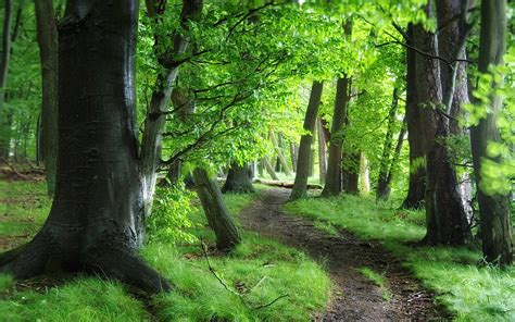Green Forest by Green Forest Path Wallpaper 1920x1200 30519