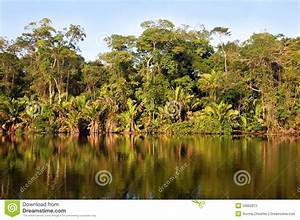 Costa Rican Rainforest Stock Photography - Image: 20662872