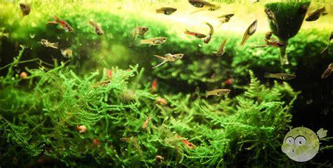 Die besten Fische für Nano Aquarien   Nanoquarium