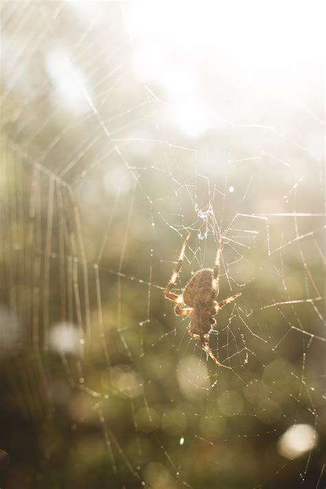 Erika Brent Sage & Zoo   Spider in the morning sun