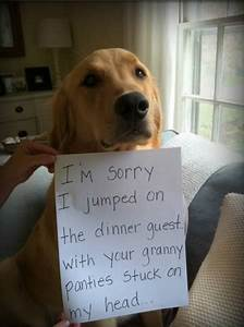 15 Absolutely Hilarious Dogshaming Signs