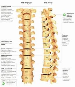 Остеохондроз грудного отдела позвоночника симптомы и лечение лекарства