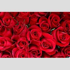 Valentine's Day Amazon Prime Makes The Vday Special With Free Flower Delivery  Ibtimes India