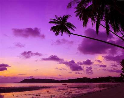 Sunset Palm Purple Tree Beach Sky Nature