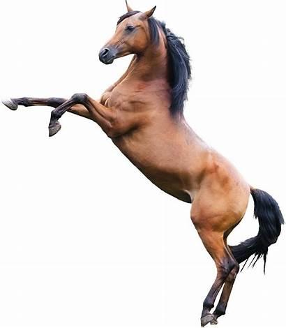 Horse Editing Concept Shadow
