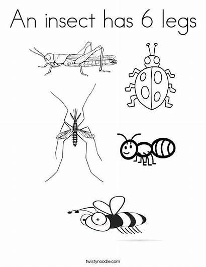 Insect Insects Coloring Legs Pages Fly Bugs