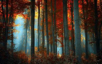 Aesthetic Wallpapers Fall Forest Nature Desktop Backgrounds