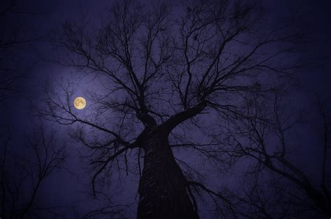 wallpaper full moon tree hd nature