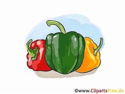 Clipart Paprika Cartoon Bild Gratis Clipartsfree Gemuese